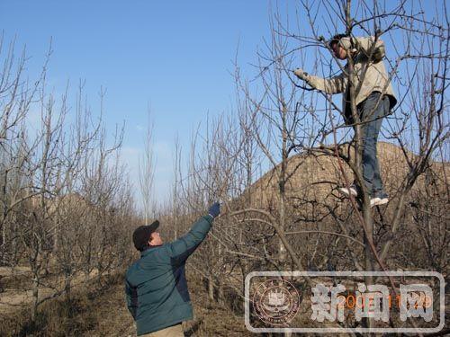 农学院开展果树冬季修剪教学实习-新闻网